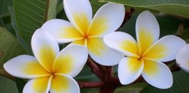 Mooie bloemen met wit en geel